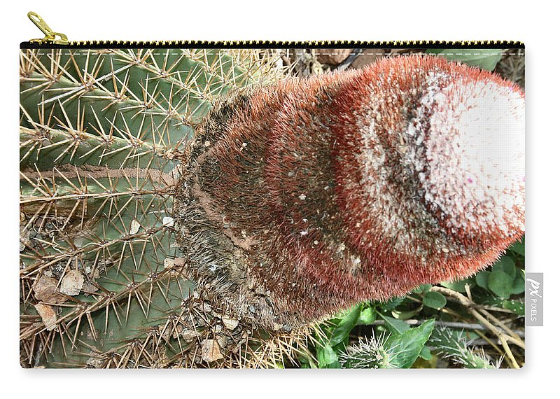 Cacti Carry-all Pouch featuring the photograph Cactus by Sharon McLain
