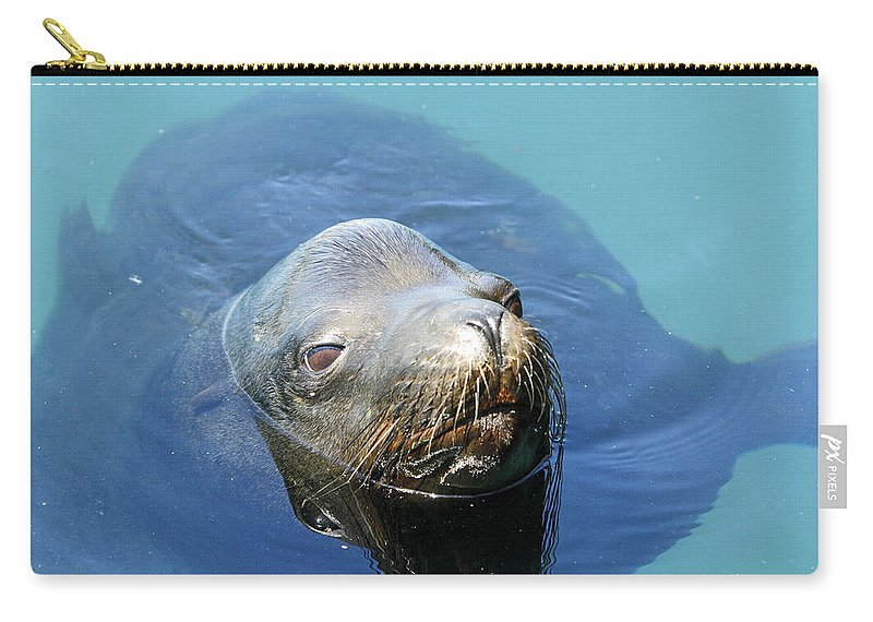Sea Lion Carry-all Pouch featuring the photograph California Sea Life by Shoal Hollingsworth