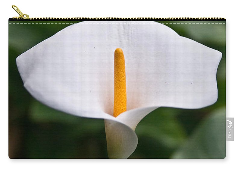 Zantedeschia Carry-all Pouch featuring the photograph Calla Lily Laterally Expanded by Douglas Barnett