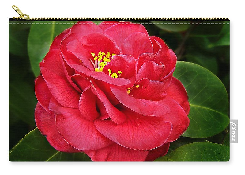 Camellia Japonica Carry-all Pouch featuring the photograph Camellia Japonica ' Dixie Knight ' by William Tanneberger