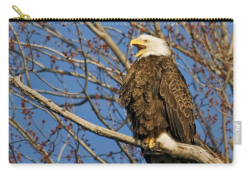 Eagles Carry-all Pouch featuring the photograph Can You Hear Me by Claudia Kuhn