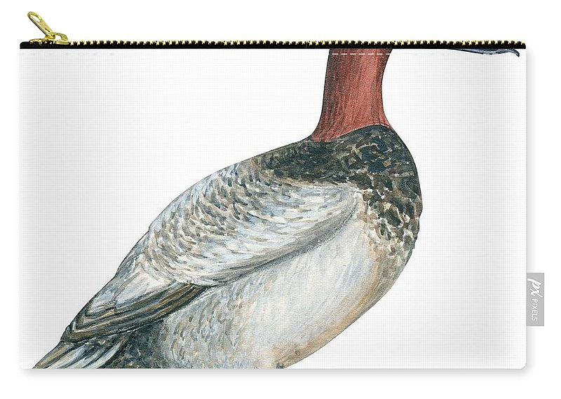 No People; Square Image; Side View; Full Length; White Background; One Animal; Wildlife; Close Up; Zoology; Illustration And Painting; Bird; Beak; Feather; Web; Animal Pattern; Canvasback Duck; Aythya Valisineria Carry-all Pouch featuring the drawing Canvasback Duck by Anonymous