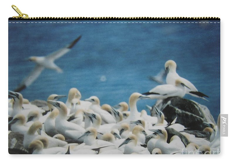 Birds Carry-all Pouch featuring the photograph Cape St. Mary Ecological Resrve by Donna Brown