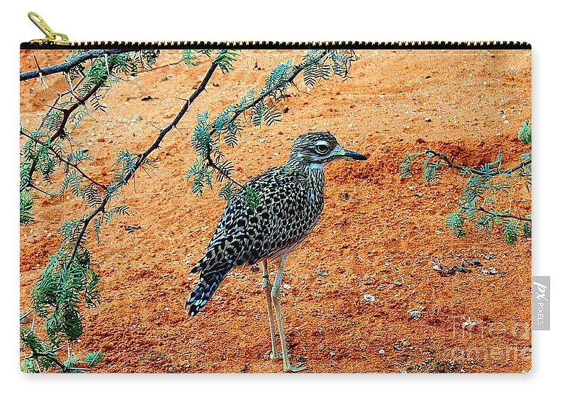 Cape Thick-knee Carry-all Pouch featuring the photograph Cape Thick-knee by Elizabeth Winter