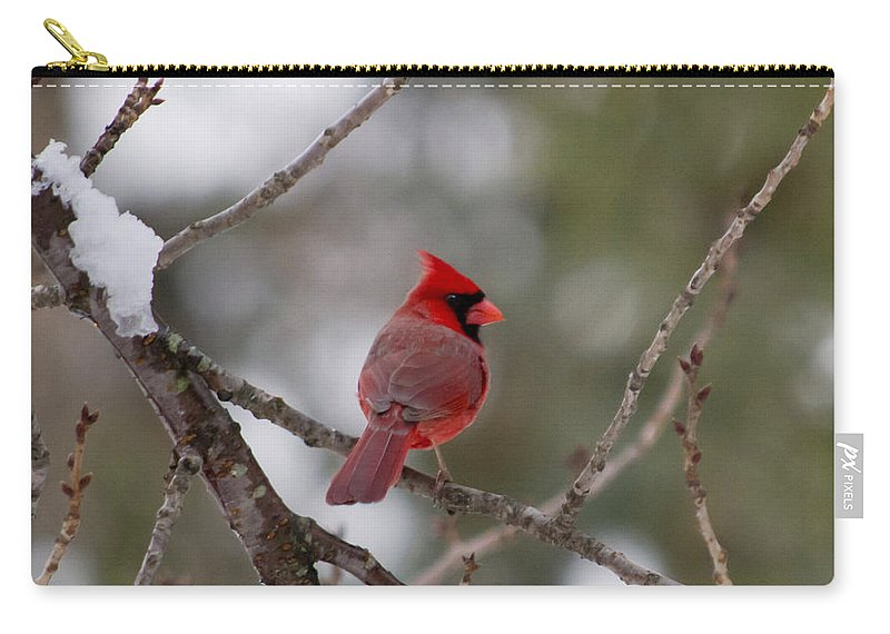 Cardinal Carry-all Pouch featuring the photograph Cardinal - A Winter Bird by Jatinkumar Thakkar