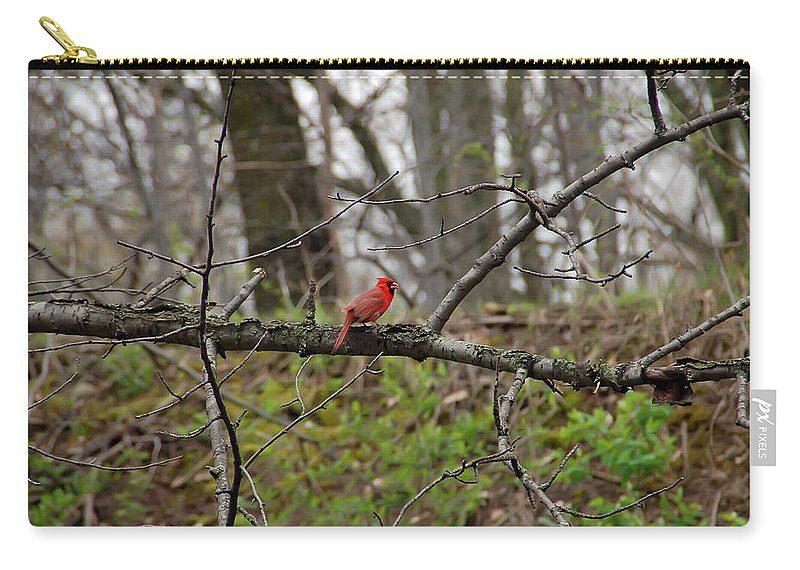 Cardinal Carry-all Pouch featuring the photograph Cardinal by Aimee L Maher ALM GALLERY