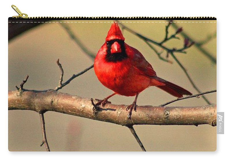 Cardinals Carry-all Pouch featuring the photograph Cardinal Beauty by Stephanie Hanson