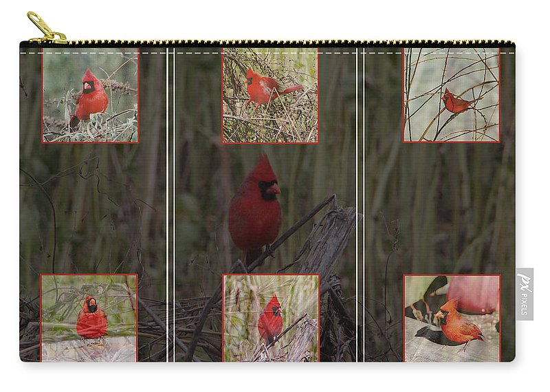 Bird Carry-all Pouch featuring the photograph Cardinal Family by Ericamaxine Price