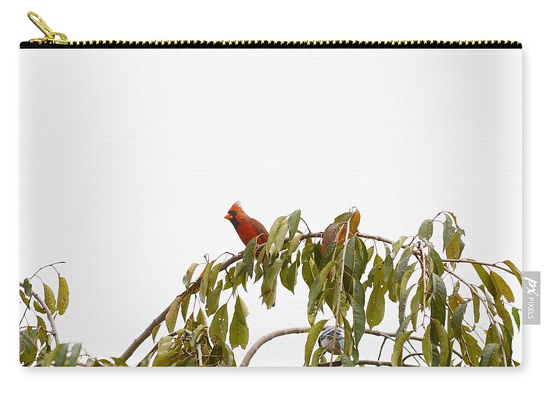 Posters Carry-all Pouch featuring the photograph Cardinal On A Branch by Sonali Gangane