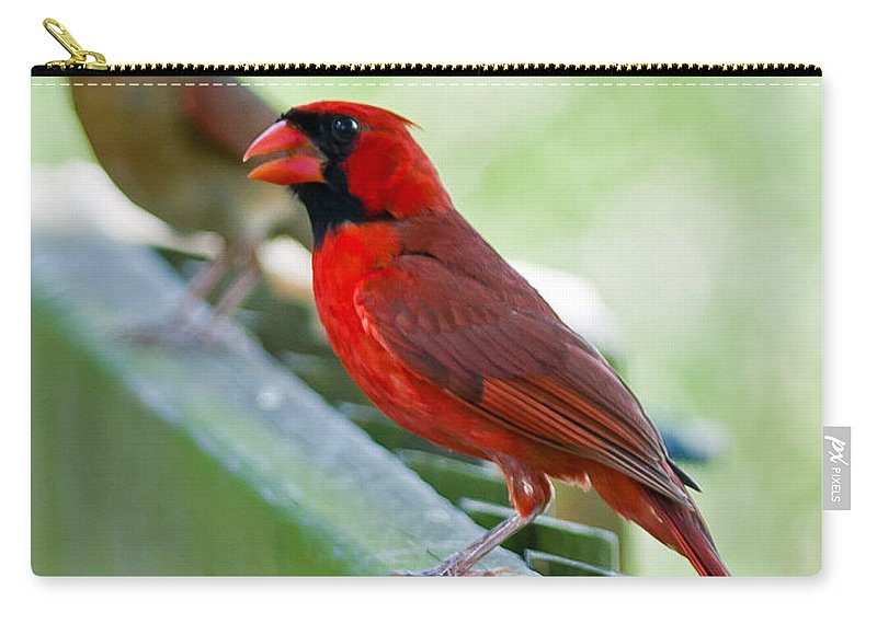 Florida Carry-all Pouch featuring the photograph Cardinals by Stephen Whalen