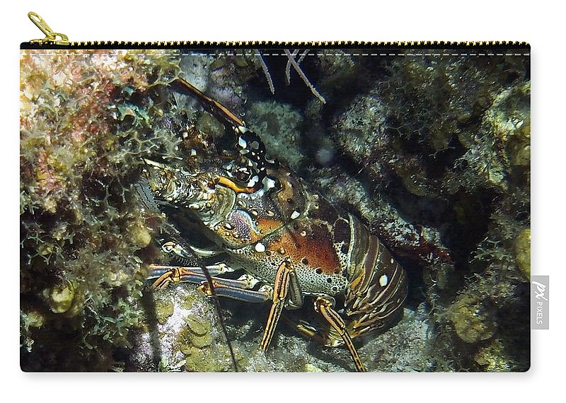 Nature Carry-all Pouch featuring the photograph Caribbean Reef Lobster On Night Dive by Amy McDaniel
