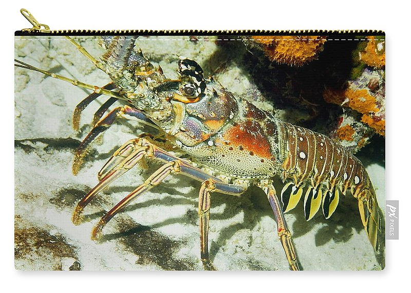 Nature Carry-all Pouch featuring the photograph Caribbean Spiny Reef Lobster by Amy McDaniel