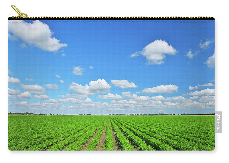 Tranquility Carry-all Pouch featuring the photograph Carrot Field by Raimund Linke