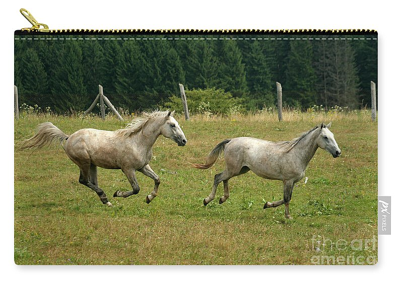 Grey Horse Carry-all Pouch featuring the photograph Catch Me If You Can by Angel Ciesniarska