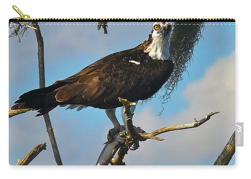 Osprey Carry-all Pouch featuring the photograph Catch Of The Day by Denise Mazzocco