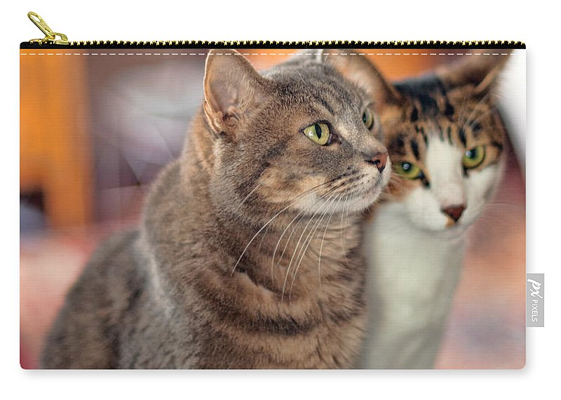 Cat Carry-all Pouch featuring the photograph Cats by Dan McManus