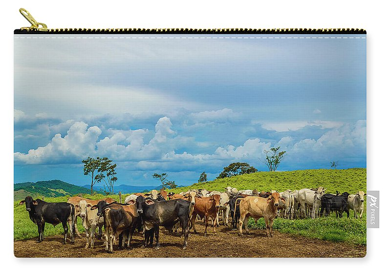 Grass Carry-all Pouch featuring the photograph Cattle by Kcris Ramos