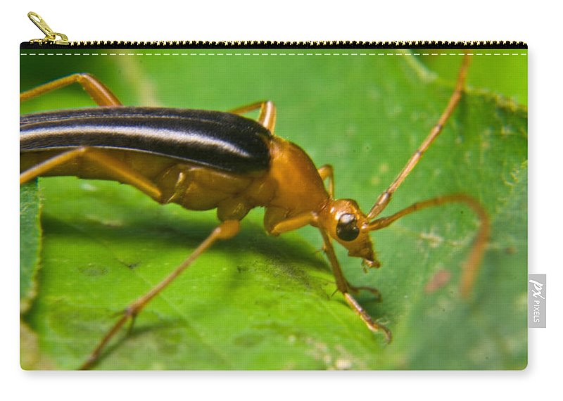 Beetle Carry-all Pouch featuring the photograph Caught by Douglas Barnett