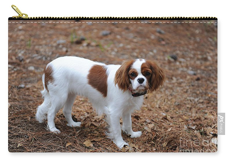 Cavalier King Charles Spaniel Carry-all Pouch featuring the photograph Cavalier Dog by Dale Powell