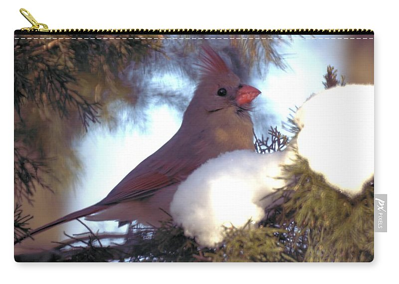 Cardinal Carry-all Pouch featuring the photograph Cedar Cardinal by Bonfire Photography