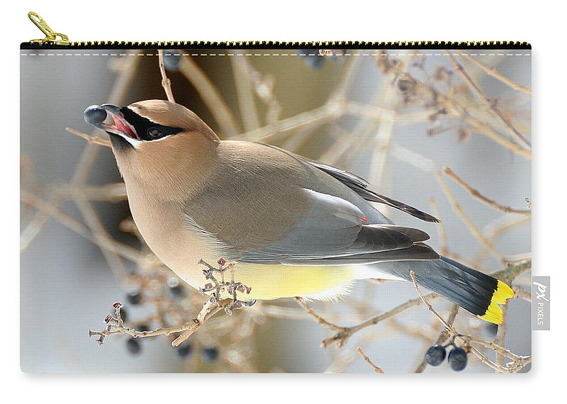 Wildlife Carry-all Pouch featuring the photograph Cedar Waxwing Feeding by William Selander