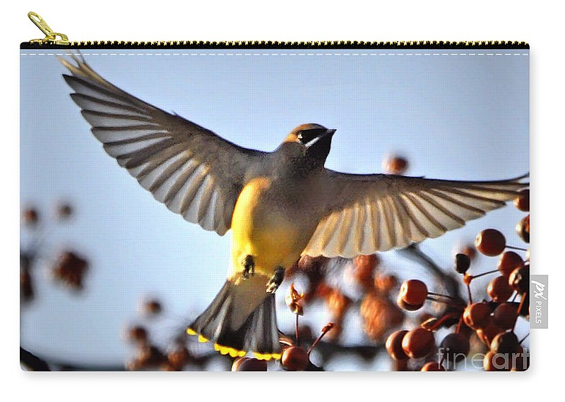 eb9b6569ed Nava Jo Thompson Carry-all Pouch featuring the photograph Cedar Waxwing  Flight by Nava Thompson