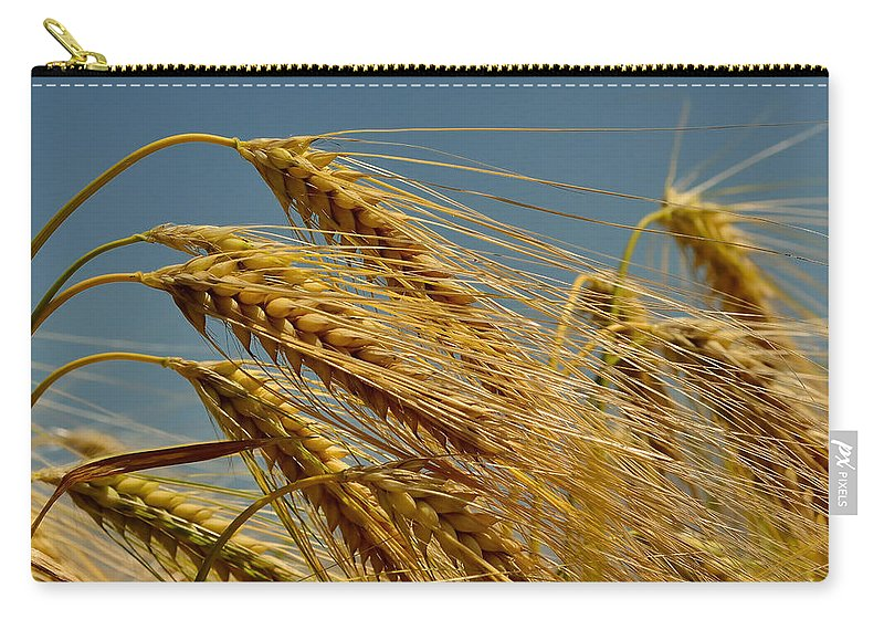 Wheat Carry-all Pouch featuring the photograph Cereals by TouTouke A Y