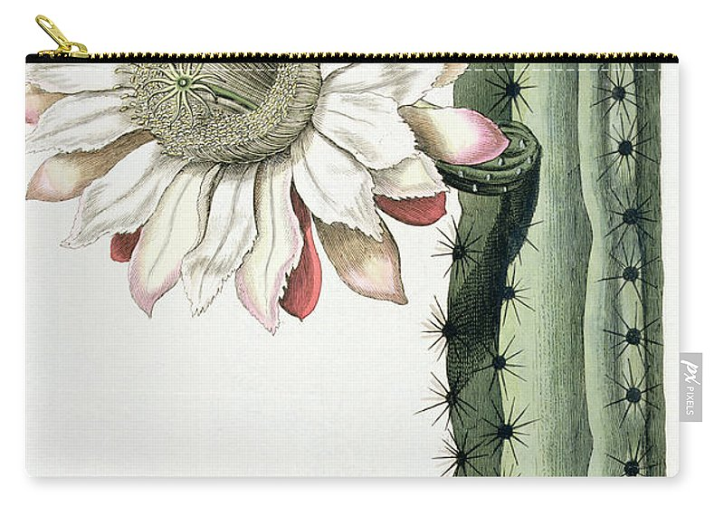 Cactus Carry-all Pouch featuring the drawing Cereus Erectus Altissimus Syrinamensis by Johann Wilhelm Weinman