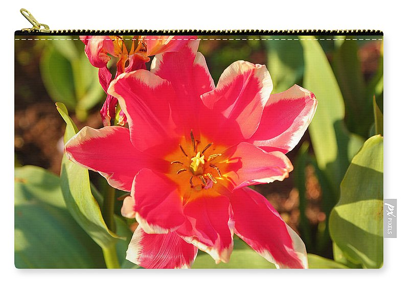 Architectural Carry-all Pouch featuring the photograph Cherry Blossoms 2013 - 093 by Metro DC Photography