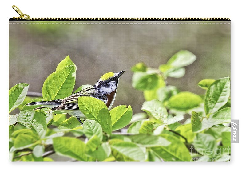 Songbird Carry-all Pouch featuring the photograph Chestnut Sided Warbler by Jan Killian