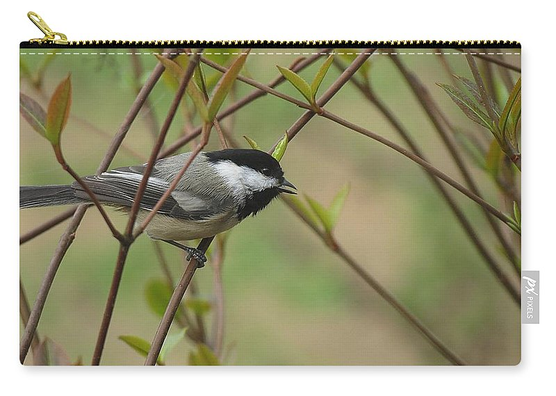 Chickadee Carry-all Pouch featuring the photograph Chickadee by MTBobbins Photography