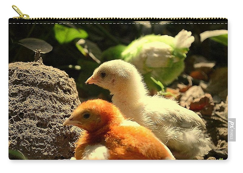 Wallpaper Buy Art Print Phone Case T-shirt Beautiful Duvet Case Pillow Tote Bags Shower Curtain Greeting Cards Mobile Phone Apple Android Nature Nature Landscape Animal Birds Wildlife Feather And Beaks Salman Ravish Khan Carry-all Pouch featuring the photograph Cute Chicks by Salman Ravish
