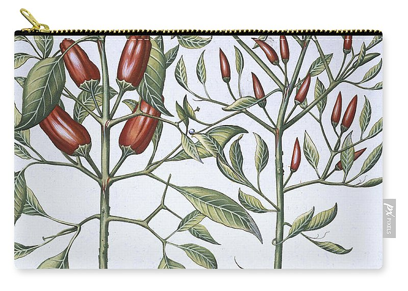 Pepper Carry-all Pouch featuring the drawing Chilli Pepper Plants by German School
