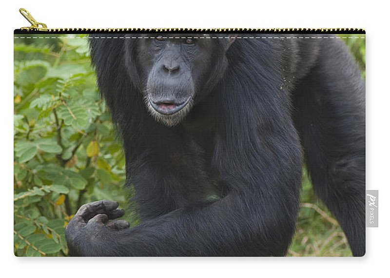 Feb0514 Carry-all Pouch featuring the photograph Chimpanzee Kenya by D. & E. Parer-Cook