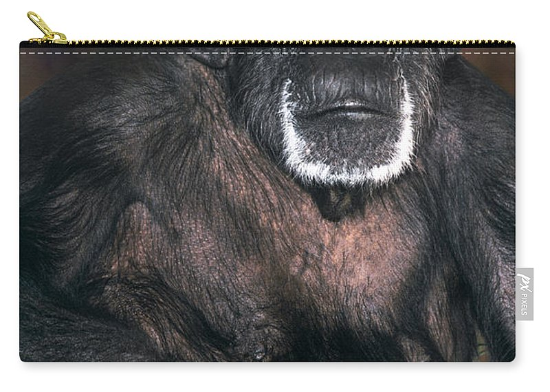 Chimpanzee Carry-all Pouch featuring the photograph Chimpanzee Portrait Endangered Species Wildlife Rescue by Dave Welling