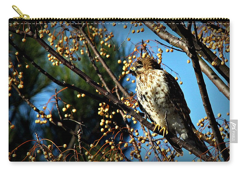 Birds Carry-all Pouch featuring the photograph China Berry Hawk by Reid Callaway