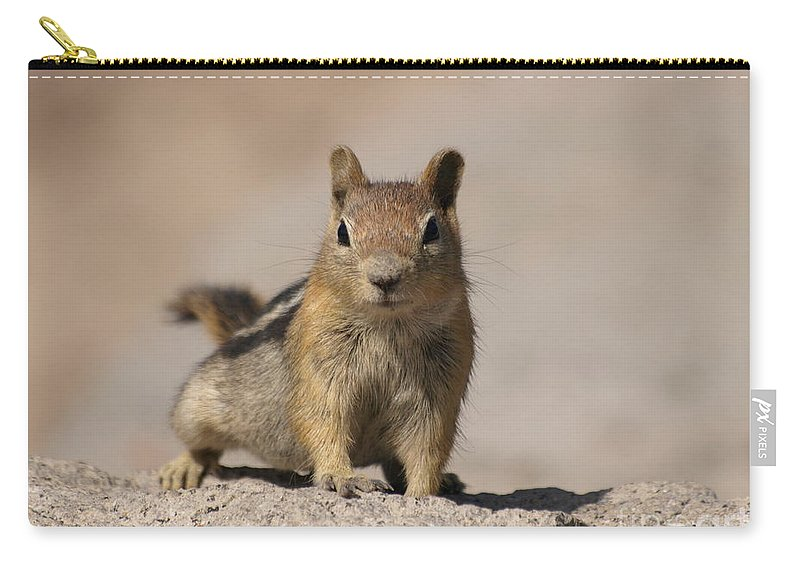 Chipmunk Carry-all Pouch featuring the photograph Chipmunk by Jacklyn Duryea Fraizer