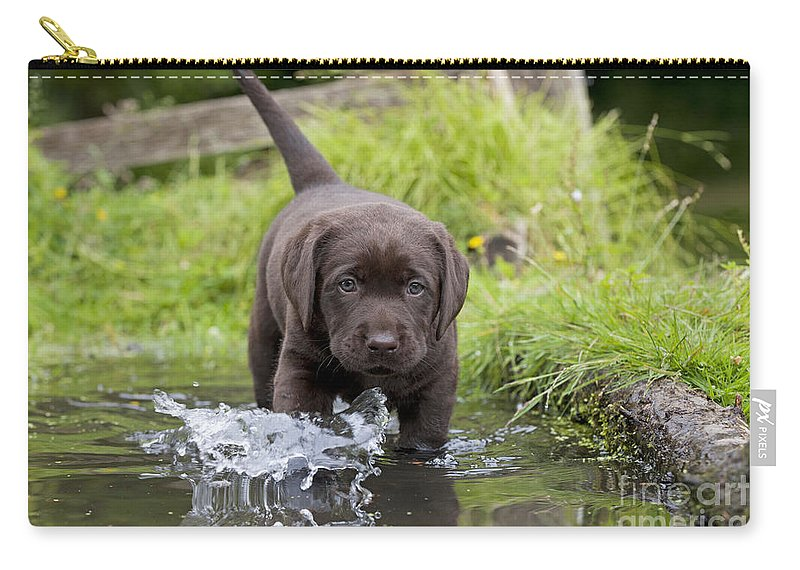 Chocolate Lab Puppy In Water Carry-all Pouch