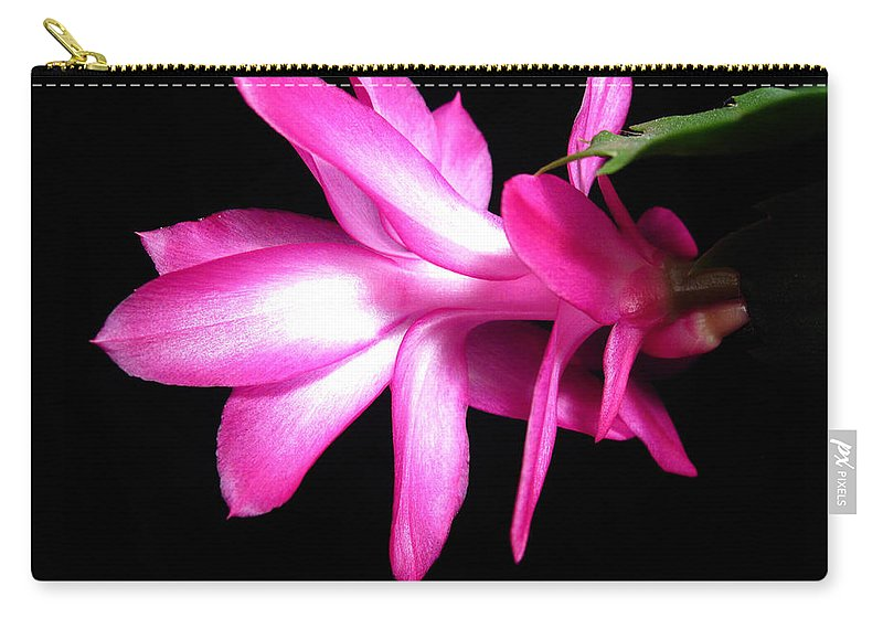 Christmas Cactus Carry-all Pouch featuring the photograph Christmas Cactus 11 by Mary Bedy