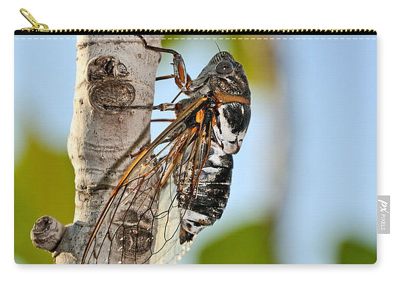 Hydra; Idra; Greece; Hellas; Greek; Hellenic; Argosaronic; Saronic; Gulf; Cicada; Insect; Fig; Tree; Islands; Holidays; Vacation; Travel; Trip; Island; Voyage; Journey; Tourism; Touristic; Summer; Sunny; Macro; Close-up; Close Up Carry-all Pouch featuring the photograph Cicada On Fig Tree by George Atsametakis