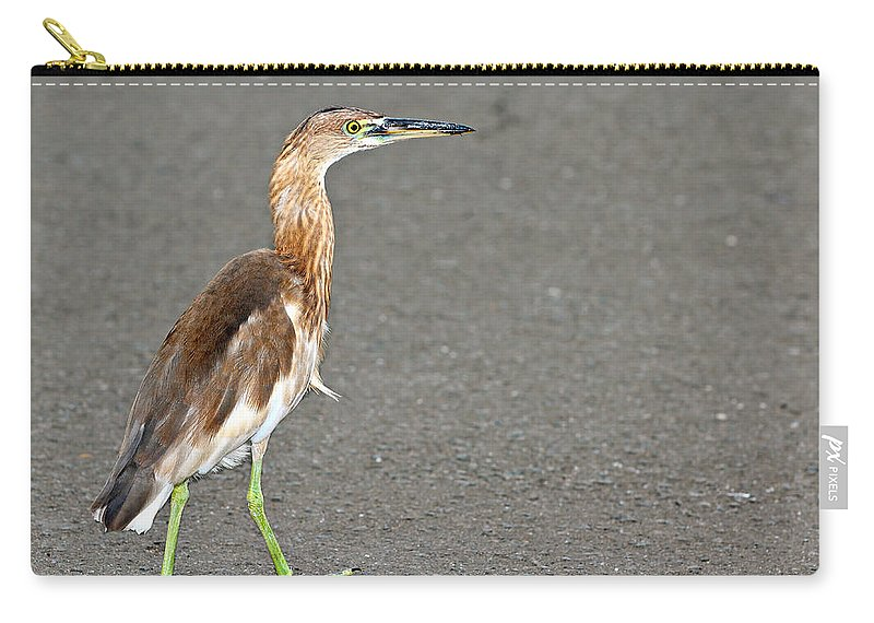 Adult Carry-all Pouch featuring the photograph Cinnamon Chestnut Bittern by Paul Fell
