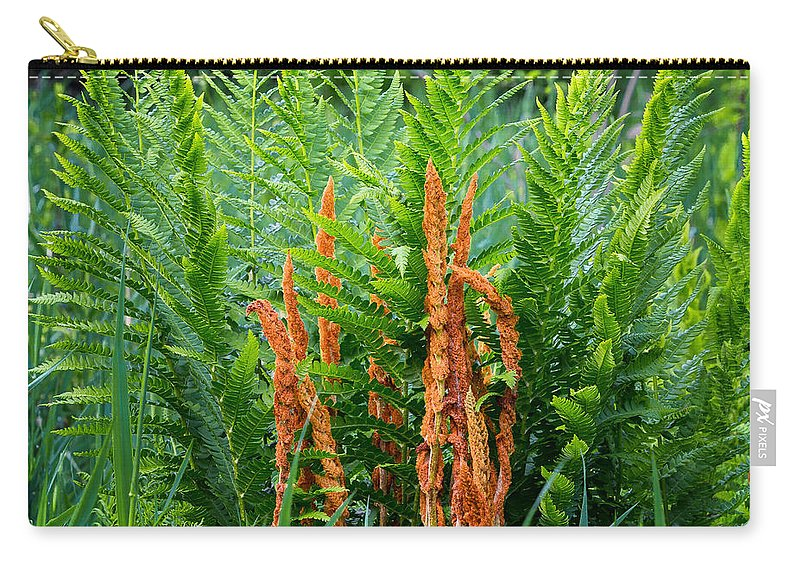 Fern Carry-all Pouch featuring the photograph Cinnamon Fern by Bill Wakeley