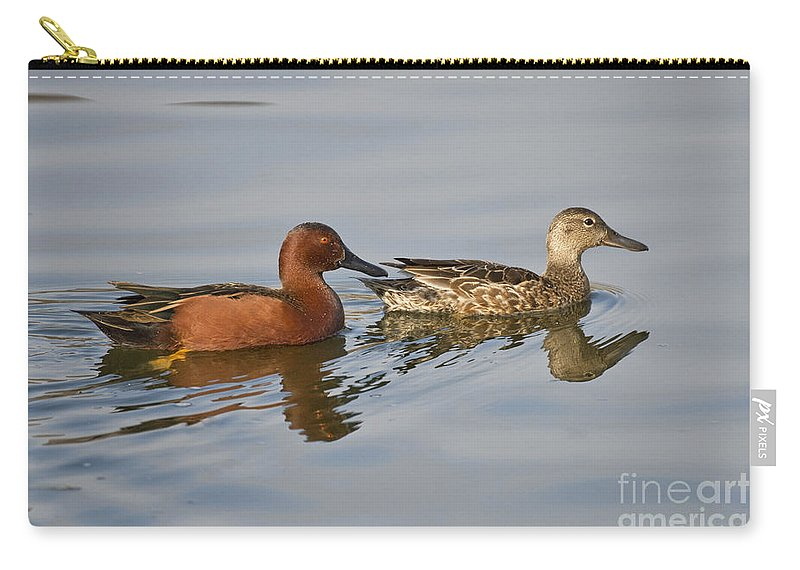Cinnamon Teal Carry-all Pouch featuring the photograph Cinnamon Teal Pair by Anthony Mercieca