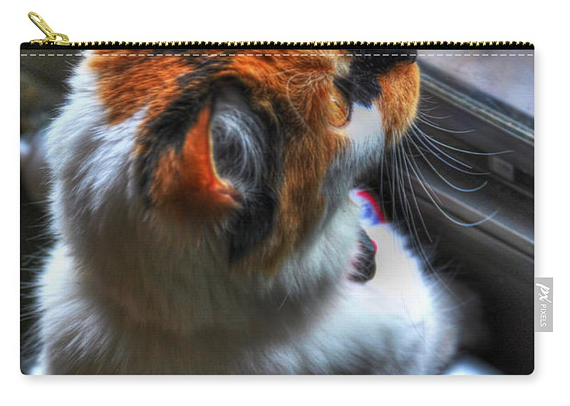 Kitten Carry-all Pouch featuring the photograph Cleo Bird Watching by Michael Frank Jr
