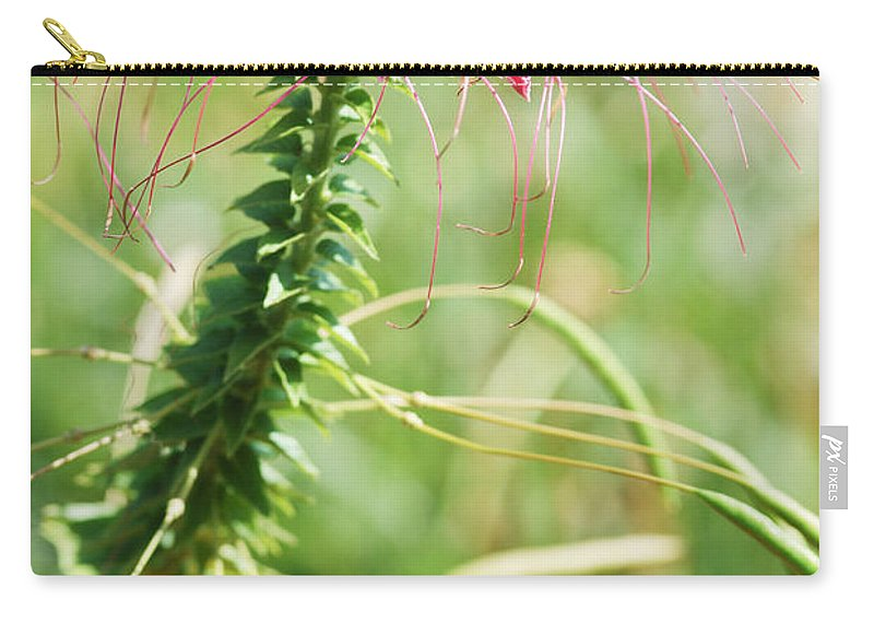 Pink Spiky Flower Carry-all Pouch featuring the photograph Cleome Hassleriana by Optical Playground By MP Ray