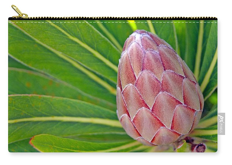 Flower Carry-all Pouch featuring the photograph Close Up Of A Protea In Bud by Anonymous