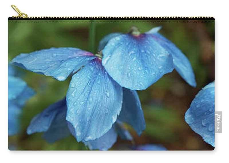 Photography Carry-all Pouch featuring the photograph Close-up Of Himalayan Poppy Flowers by Panoramic Images