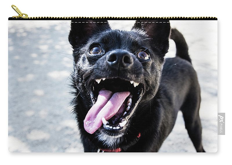 Pets Carry-all Pouch featuring the photograph Close-up Shot Of A Little Black Dog - by Amandafoundation.org