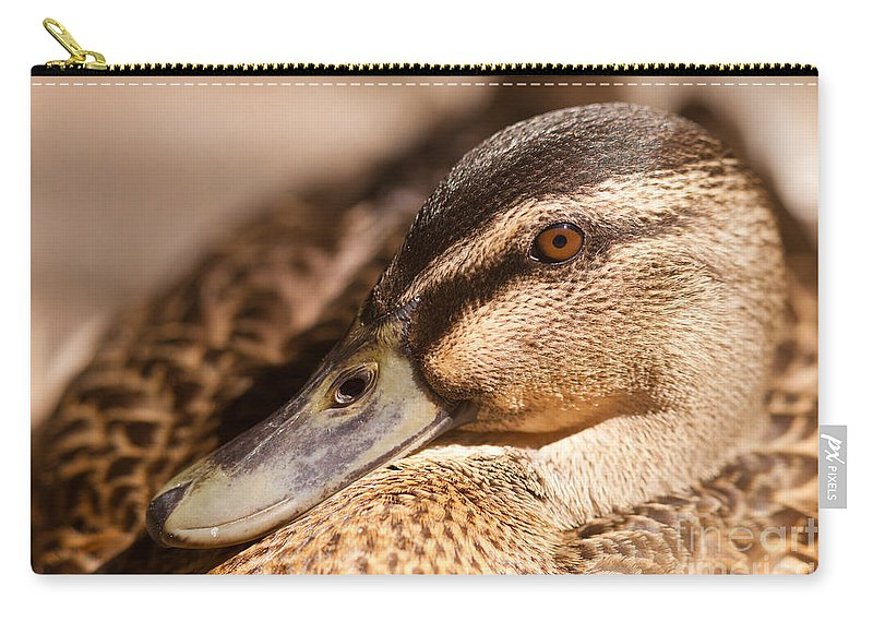 Adult Carry-all Pouch featuring the photograph Close Up Shot Of Female Mallard Duck by Stephan Pietzko