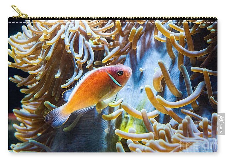 Amphiprion Carry-all Pouch featuring the photograph Clown Fish - Anemonefish Swimming Along A Large Anemone Amphiprion by Jamie Pham